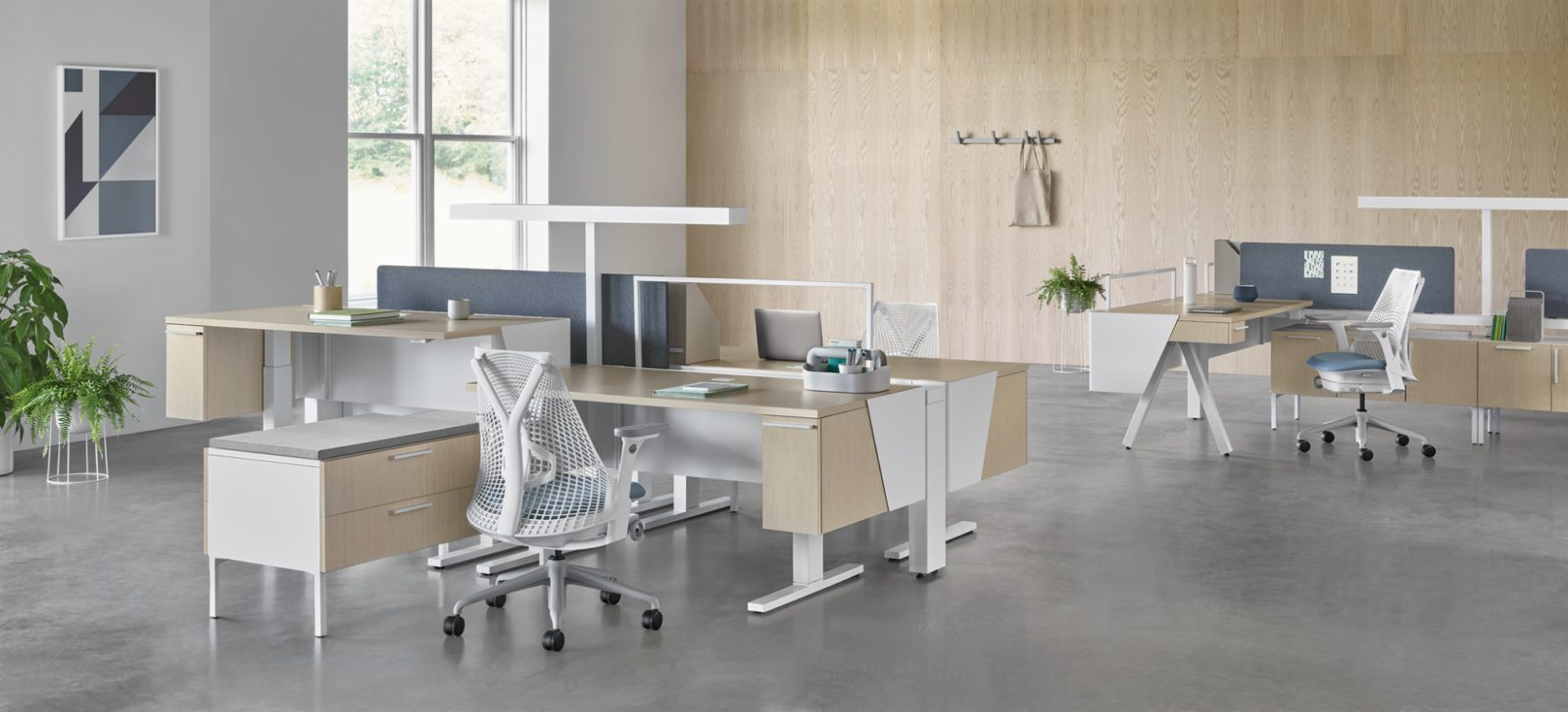 Herman Miller Canvas sit to stand Desks with white and grey Sayl chairs